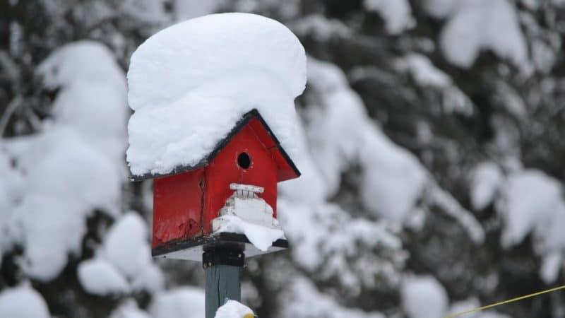 Cinq conseils de jardinage pour l'hiver